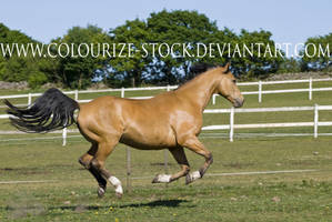 Warmblood 11 by Colourize-Stock