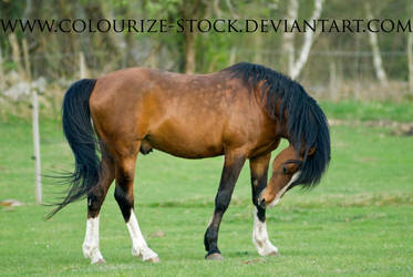 Sha Stock 3 by Colourize-Stock