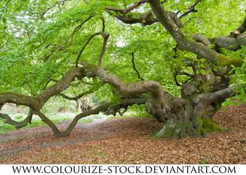 Landscape Stock 46 by Colourize-Stock