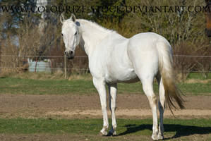 Grey Mare Stock 5 by Colourize-Stock