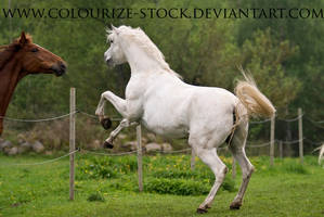 Grey Mare 6 by Colourize-Stock