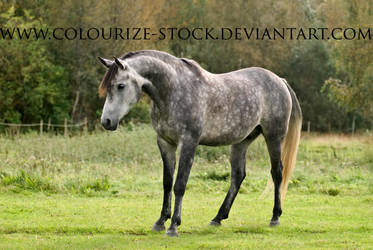 Itz 33 by Colourize-Stock