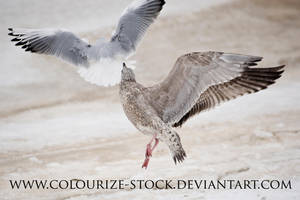 Bird Stock 13 by Colourize-Stock