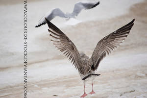 Bird Stock 12 by Colourize-Stock