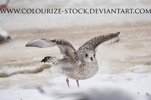 Bird Stock 11 by Colourize-Stock