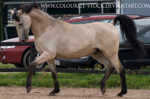 Warmblood stock 48 by Colourize-Stock