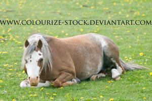 Welsh Mare 5 by Colourize-Stock