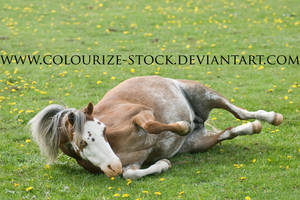 Welsh Mare 8 by Colourize-Stock