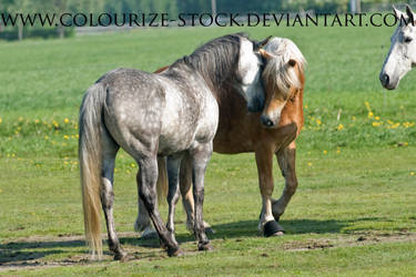 Itz 46 by Colourize-Stock