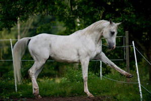 Arabian 61 by Colourize-Stock