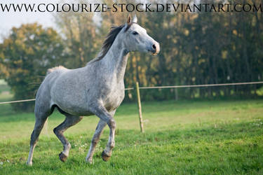 Arabian 74 by Colourize-Stock