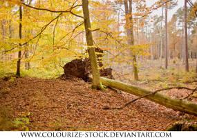 Landscape 102 by Colourize-Stock