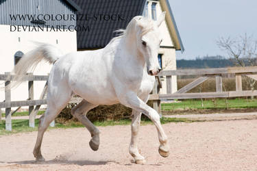 Arabian 88 by Colourize-Stock