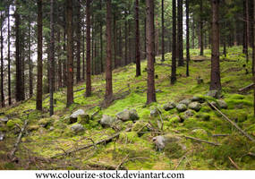 Landscape Stock 188 by Colourize-Stock