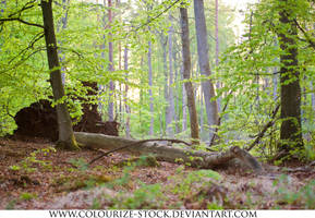 Landscape Stock 201 by Colourize-Stock