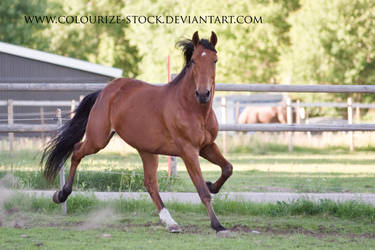 Standardbred 27 by Colourize-Stock