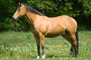 Warmblood 49 by Colourize-Stock