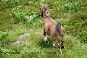 Arabian 99 by Colourize-Stock