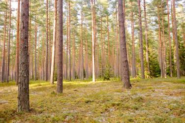 Landscape Stock 171 by Colourize-Stock