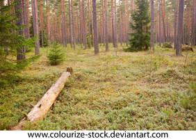 Landscape Stock 174 by Colourize-Stock