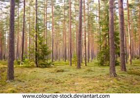 Landscape Stock 253 by Colourize-Stock
