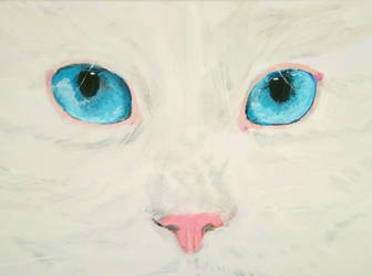 The Catface by Clementine-Schakal