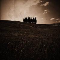 terra di toscana 3099 by bagnino