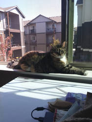 my cat at the window by silverhedgehog2009
