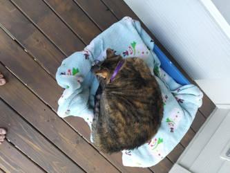 mt cat sleepying by silverhedgehog2009