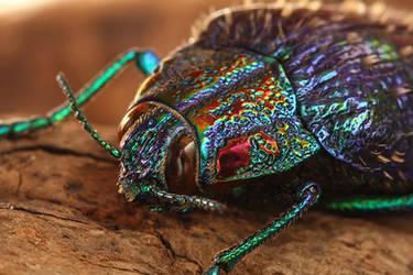 Jewel beetle by ELKAPL