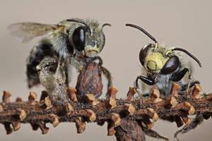 BEES by ELKAPL
