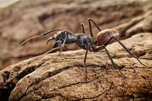 ANT by ELKAPL
