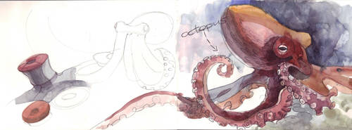 Octopus by chicoriso