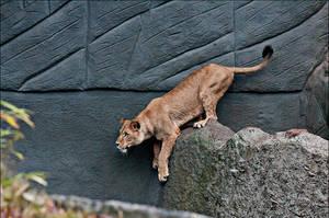 Lion01 by Stockimal