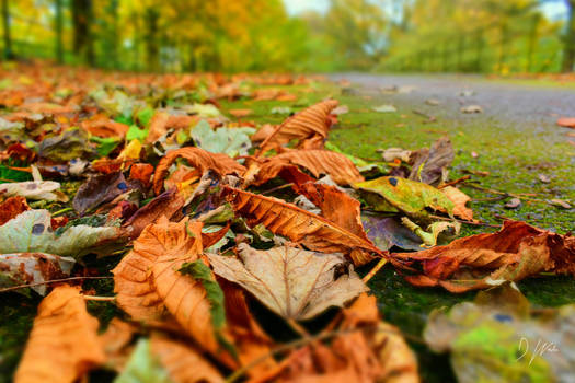 Autumn Crunch