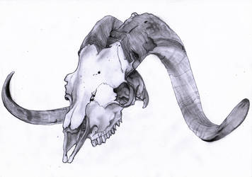 Goat Skull Practice by Anpuankhses