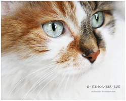 what cats think about? by Stefansider