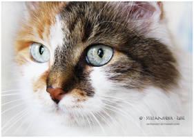 piercing eyes by Stefansider