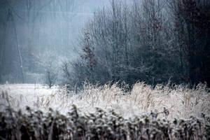 wintery by Shreever