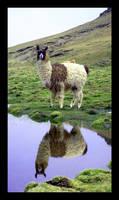 Postal Bolivia by jaimemh