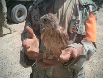 Falcon Punch by Dyegochi