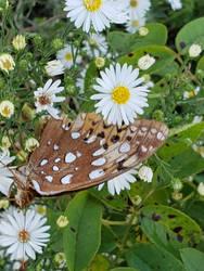 Butterfly in october by TSofian