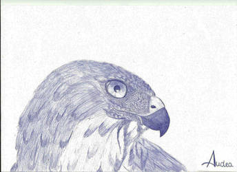 Eagle by Audea