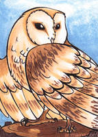 ACEO Barn Owl by armaina