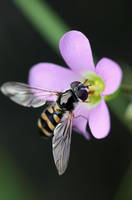Insect on a Flower by sourcow