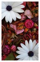 Flowers on Pot.....Pourri by sourcow