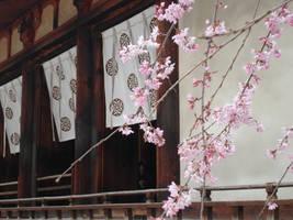 Blossoms at Horyuji by Ekuboryu