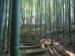 Bamboo path by Ekuboryu