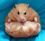 Chmurka, my famous hamster by puchikumo