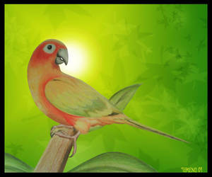 Sun Conure Parrot by TorenoWorks
